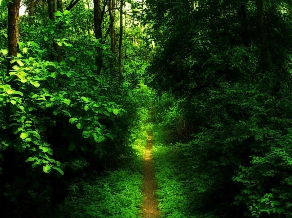 narrow-path-e1469321670157