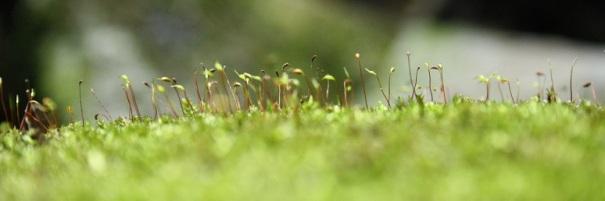 newness-nature
