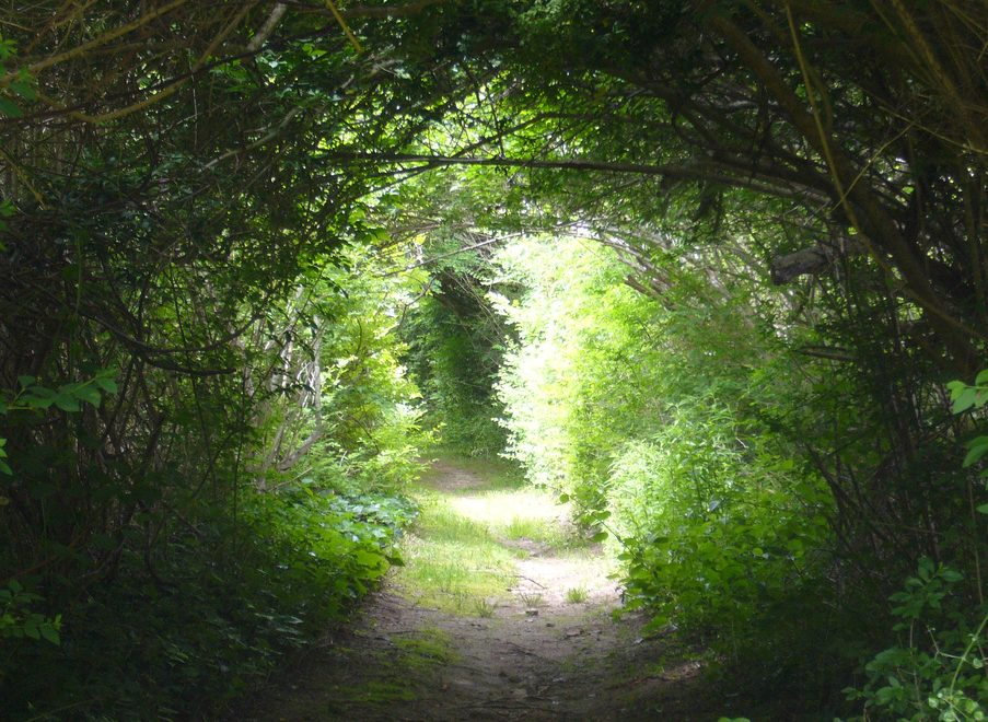 path-thru-woods-e1469321864232